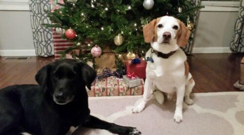 Nicus Employee Dogs Under Christmas Tree